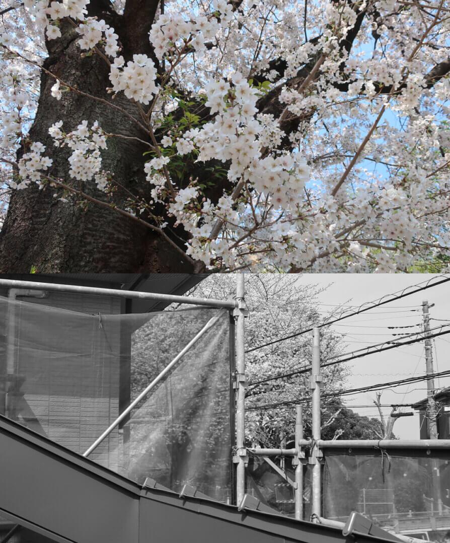 浦和S邸 桜2021
